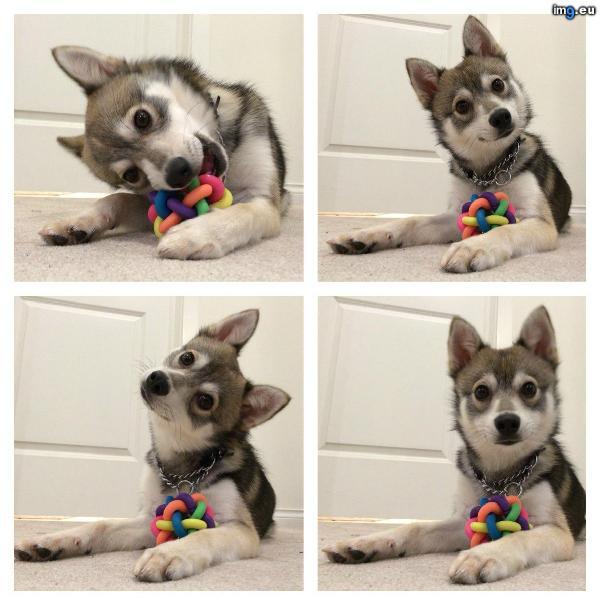 [Funny] Do I hear...treats?